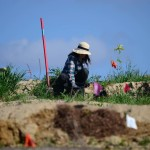 A volunteer turns out to help plant trees. Photo by Tony Cagala