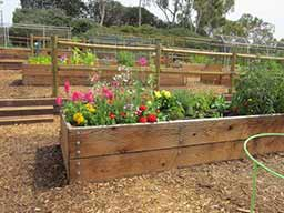 The Calavera Schoolhouse Community Garden in Carlsbad is the city's second public community garden. The other is the Harold Smerdu Community Garden. Courtesy photo