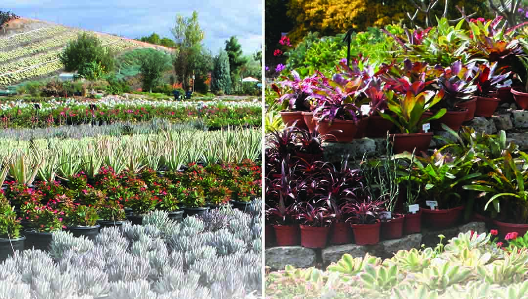 Find inspiration for your garden, and a wide variety of succulents, at Waterwise Botanicals Nursery and Garden Center in North County. Courtesy photos