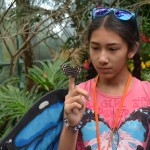 Emi Gannod, 11, observes a Banded Purple Wing butterfly at the San Diego Zoo Safari Park's Butterfly Jungle exhibit. Photo by Tony Cagala