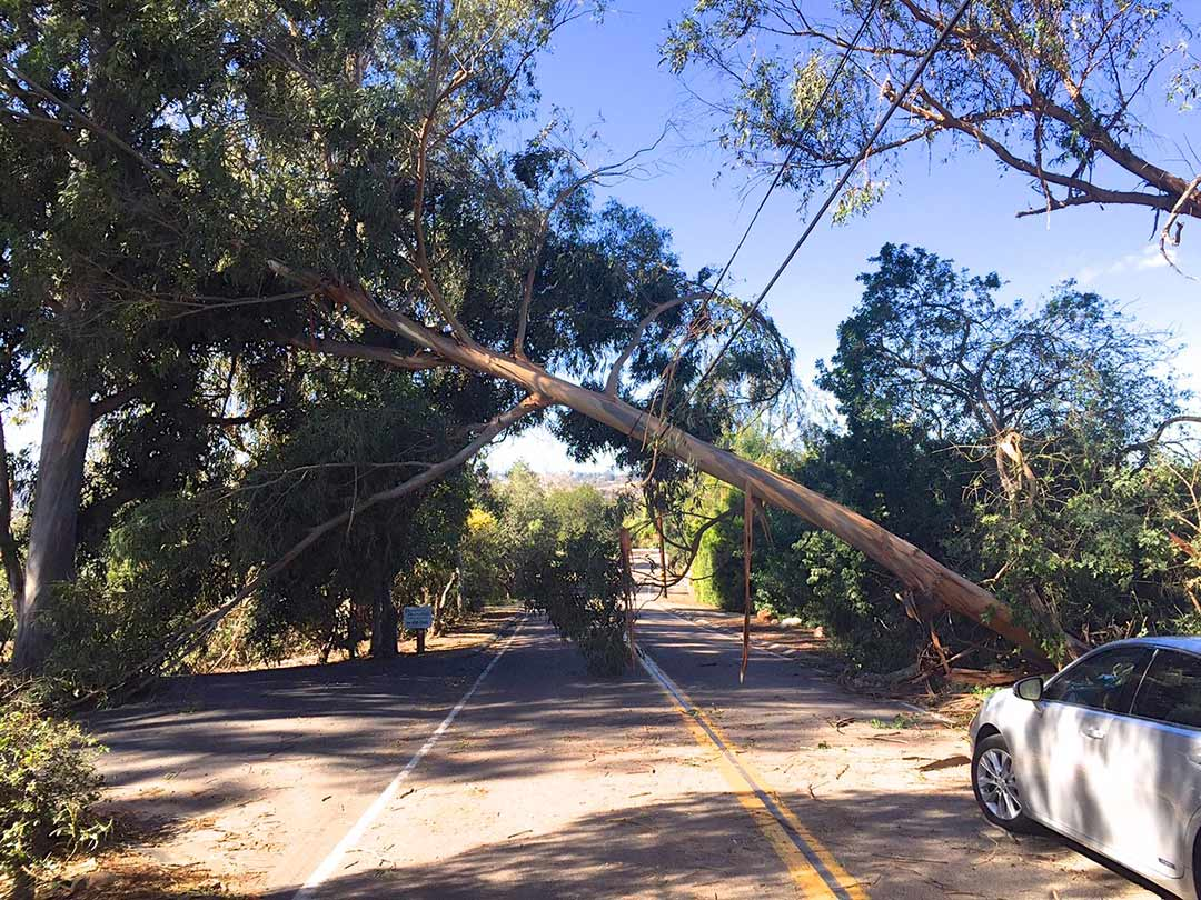 Windstorm cleanup  and tree safety addressed