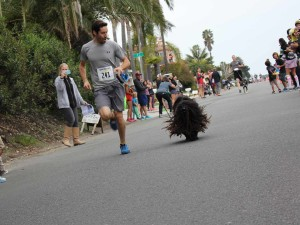 Jose Marroyo, of Encinitas, and his Hungarian puli come in third in the dog mile. The Encinitas Mile had divisions for two and four legged runners. Photo by Promise Yee