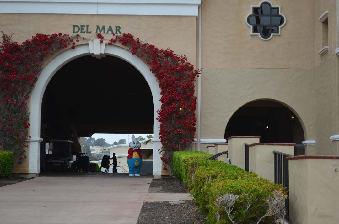The White Rabbit heads back down the tunnel at the Del Mar Fairgrounds Tuesday. Photo by Tony Cagala