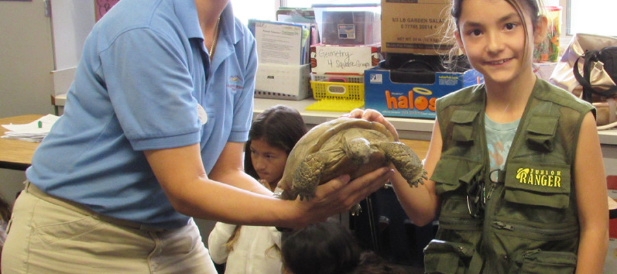 Student's analysis predicts desert tortoise's emergence