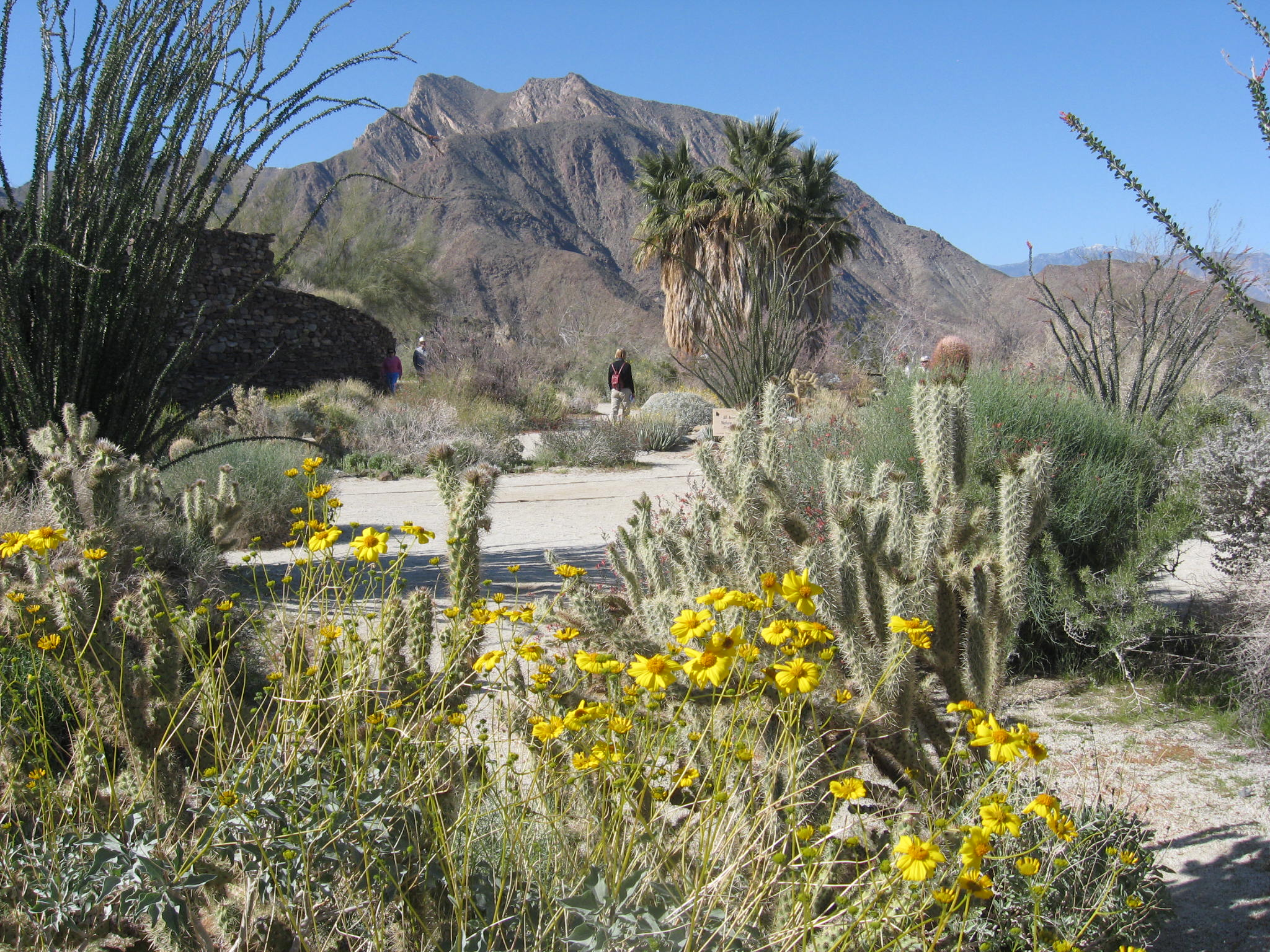 Borrego Springs celebrates cooler weather with Borrego Days Desert Festival Oct. 21 to Oct. 23. Courtesy photos