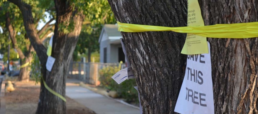 Tree removal overshadows city improvement project
