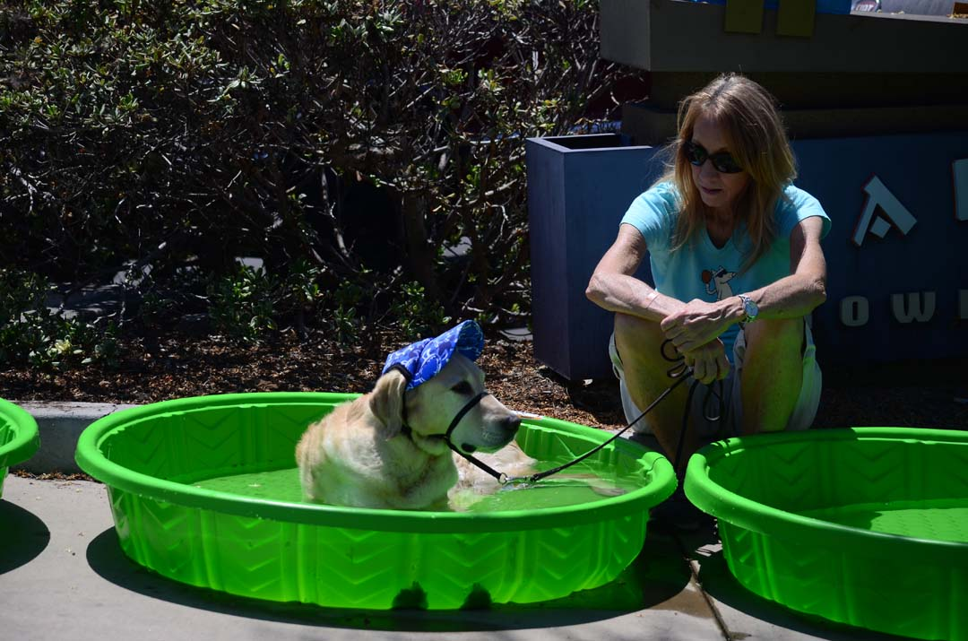 Bill the dog takes a dip in the pool to cool off while owner Vicki Boynton takes a break from the Dog Days of Summer. Photo by Tony Cagala