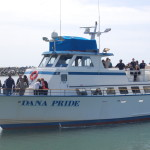 See sharks, sea lions, whales, dolphins and more during two-hour cruises offered by Dana Wharf Sportfishing & Whale Watching in Dana Point. Some experts believe that sea life has been congregating here because of an unusually abundant food supply due to changes in the water temperature.