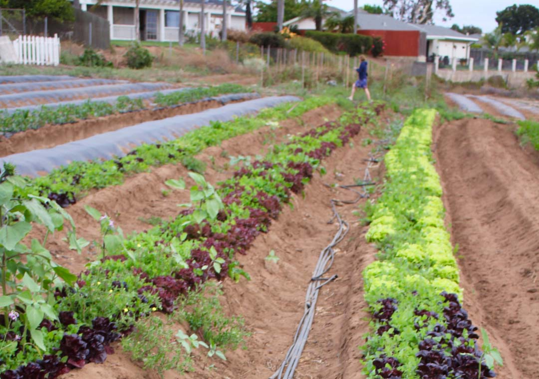 Oceanside moves forward with agritourism efforts