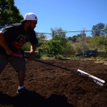 Peter Prado, a sales representative for Dunn-Edwards Paints, rakes an area for planting fruit trees. Photo by Tony Cagala
