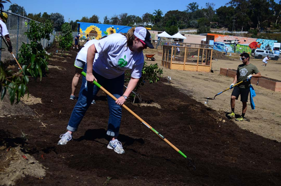 Kristen Spenst rakes an area where more than 25 fruit trees were planted. Photo by Tony Cagala