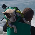 Faith, a rescue dog, gets carried into the waves by his owner for the start of the large dog heat. Photo by Tony Cagala