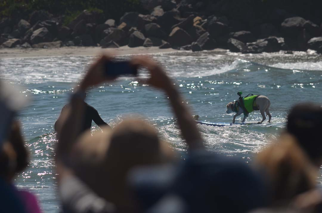 Faith has one of the longest wave rides of the day, nearly surfing to main portion of Dog Beach. Photo by Tony Cagala