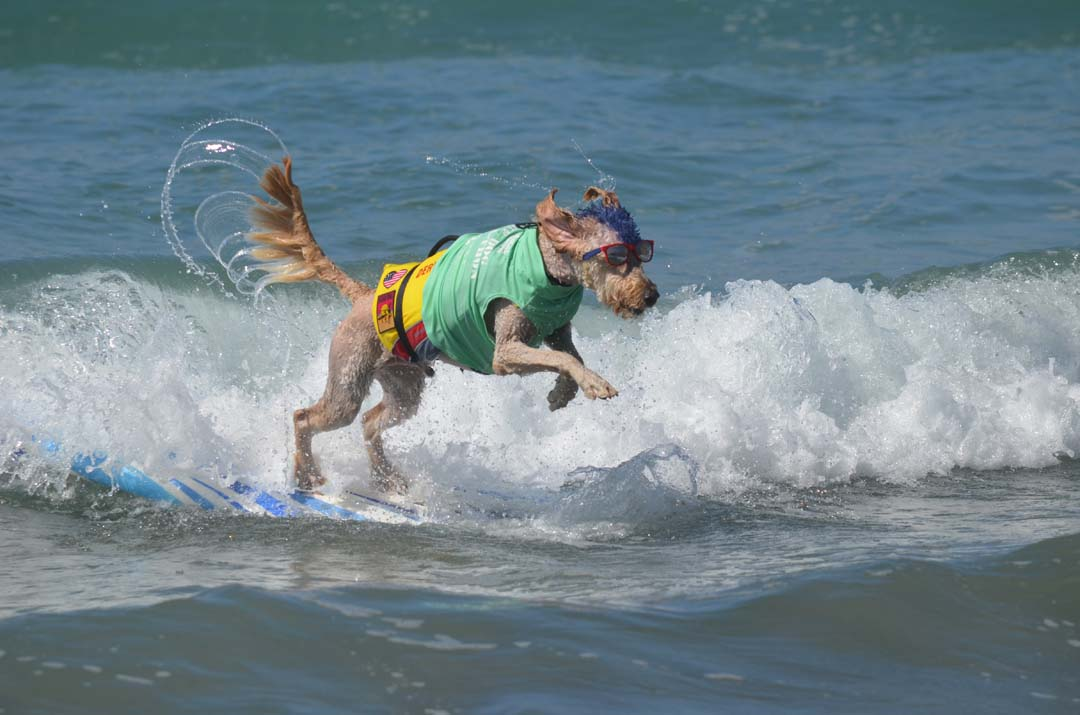 Derby bails out of a wave. Photo by Tony Cagala
