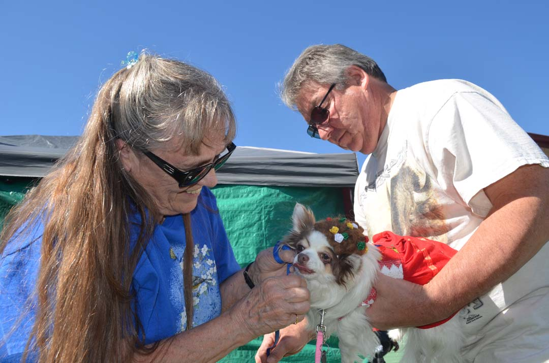 Linda Bloom, left, and Ron Bloom prep Patches, their 9-year-old Chihuahua for the costume contest. Photo by Tony Cagala