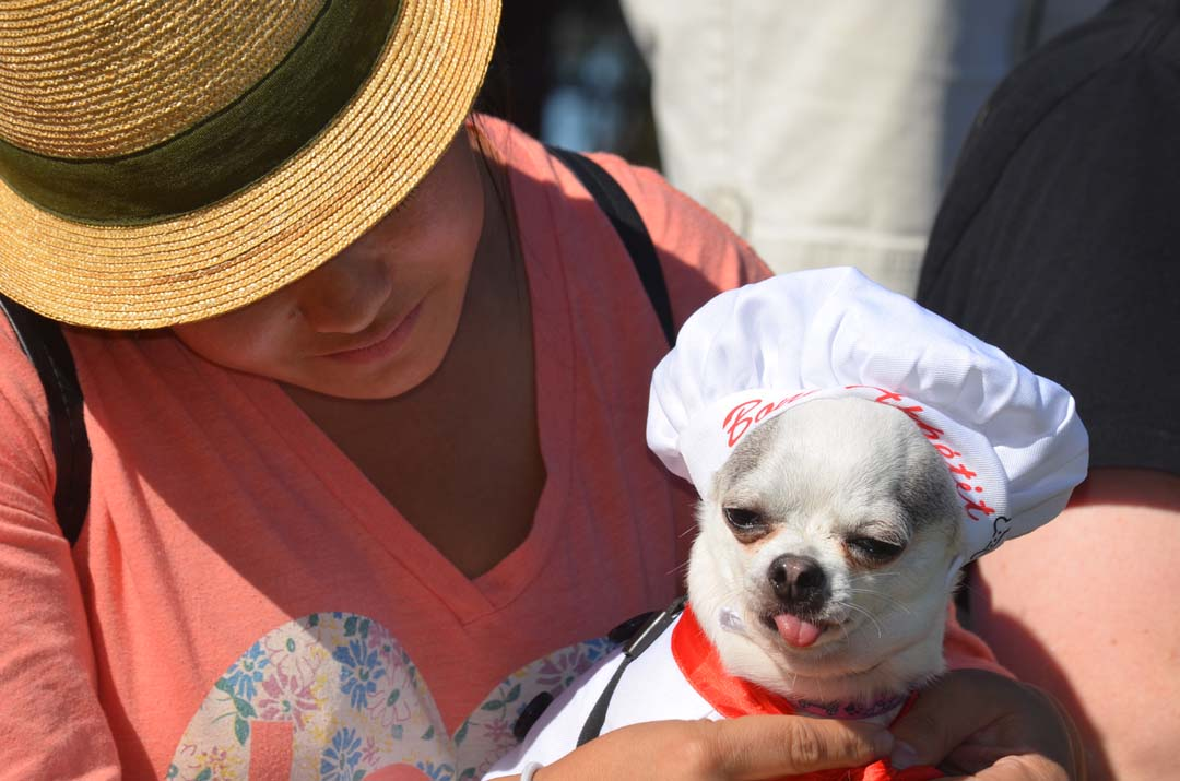 Owner Michelle Cuaresma gets her dog Mona ready for the Chihuahua costume contest. Photo by Tony Cagala