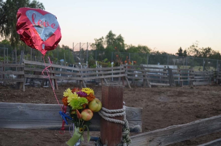 A memorial is set up at the San Marcos corral where a 15-year-old horse was mauled by two Pit Bulls on Saturday. The horse had to be put down due to its injuries. Photo by Tony Cagala