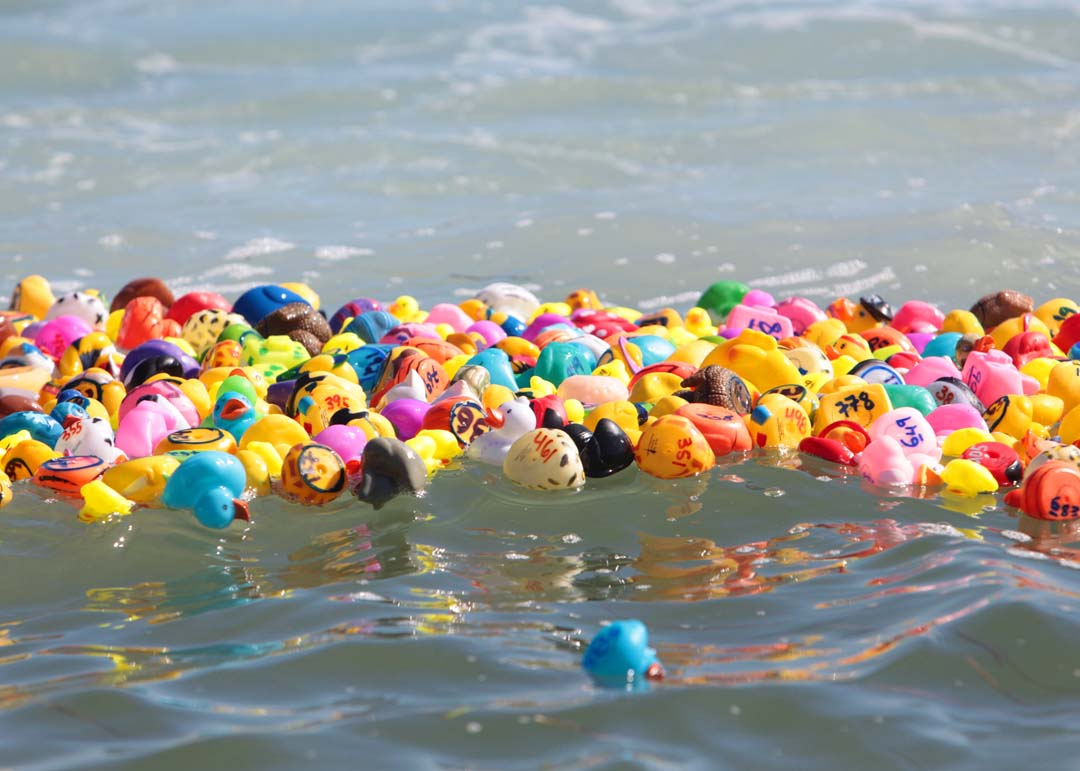 The California Water Sports facility located at Carlsbad's Agua Hedionda Lagoon hosted their 2nd annual Rubber Ducky Derby. Photo by Pat Cubel