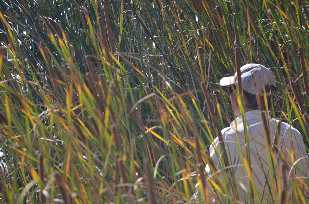 A fisherman among the reeds watches his line, waiting to catch a trout. Photo by Tony Cagala