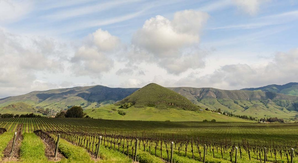 Tolosa Winery paints a beautiful portrait of the vineyard landscape just south of the city of San Luis Obispo, along the Central Coast of California. Photo courtesy Tolosa Winery