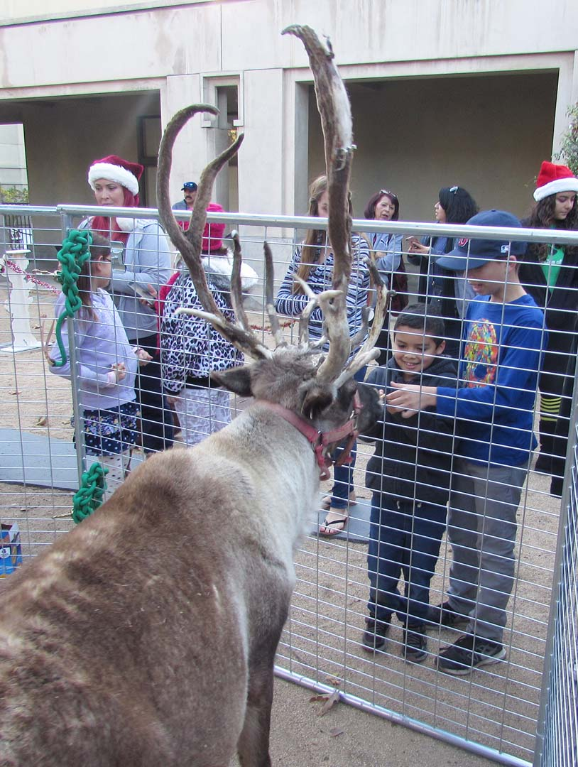 Children feed reindeer during Saturday's 12th annual Winter Wonderland at the California Center for the Arts, Escondido. Photo by Steve Puterski