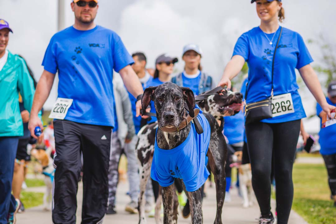 Dogs, walkers will fill up Kit Carson Park Feb. 25