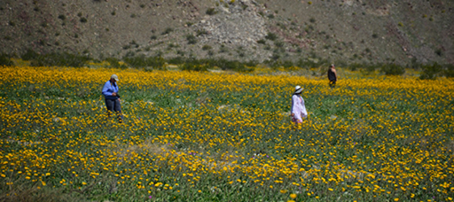 Borrego's 'super bloom' did not disappoint
