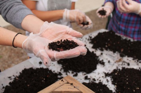 Worms turn waste into wealth for gardens
