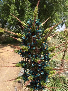 The Sapphire tower has become a big attraction at the San Diego Botanic Garden. Photo by Aaron Burgin