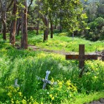 Visitors on their way up the hill to the historic Wrigley home, now an exclusive bed-and-breakfast and restaurant called Mt. Ada, will pass Catalina Island's idyllic pet cemetery. Recent rains have created an unusually lush landscape. Photo by Jerry Ondash