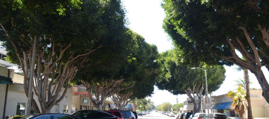 Tree ordinance receives unanimous Council OK