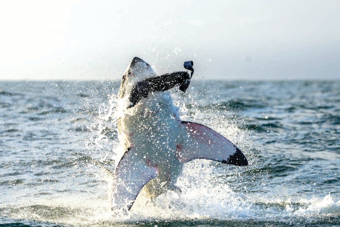 Recent shark attack, sightings: Should they be a cause for concern?