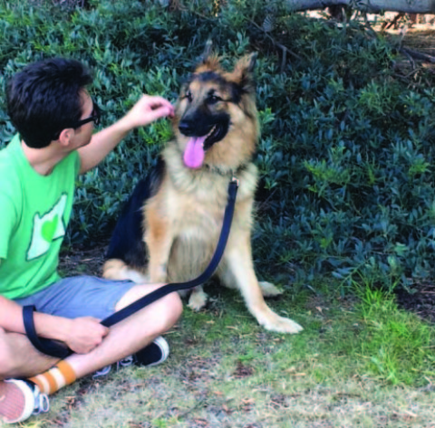 German Shepherd Rescue provides hope