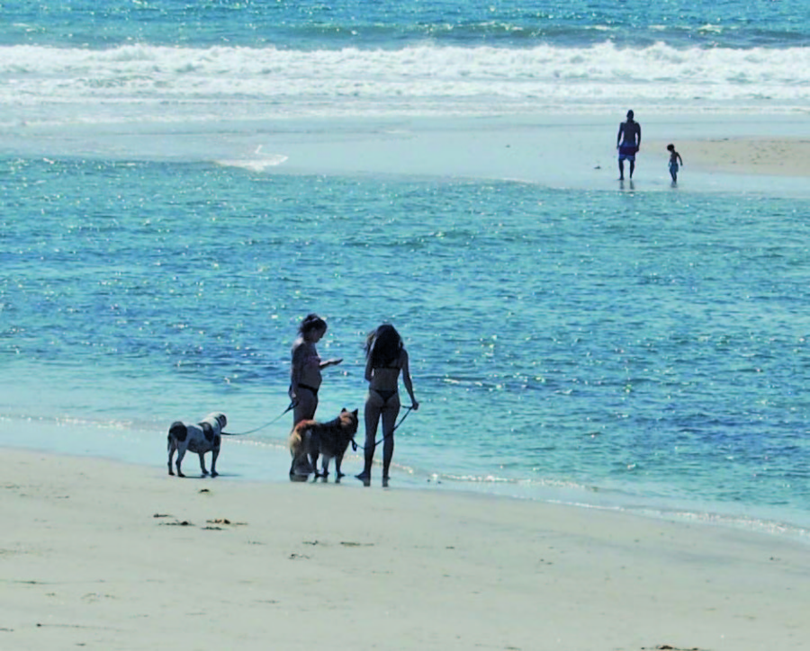 More off-leash dog days on the way