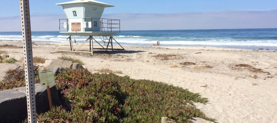 Sand dunes plan heads to Coastal Commission