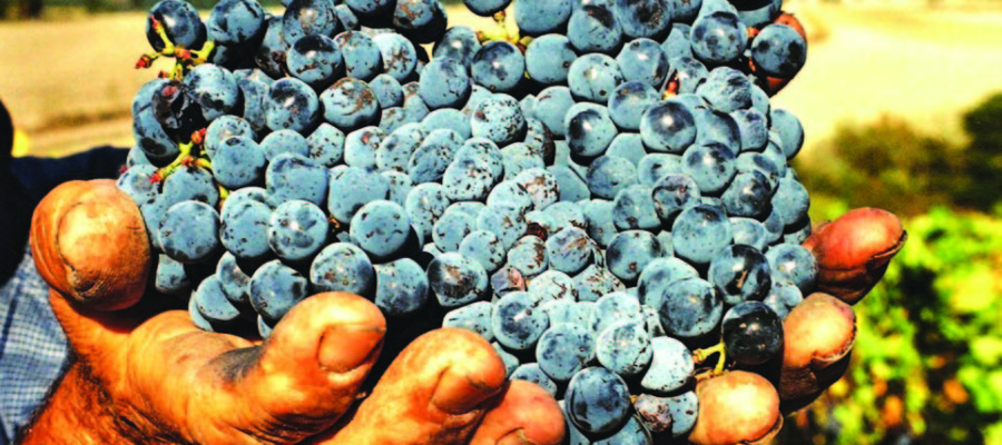 Taste of Wine: The elegance of  Brunello, Tuscany's  crowning achievement