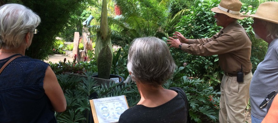 Rare chance to get a whiff of the 'Corpse Flower'
