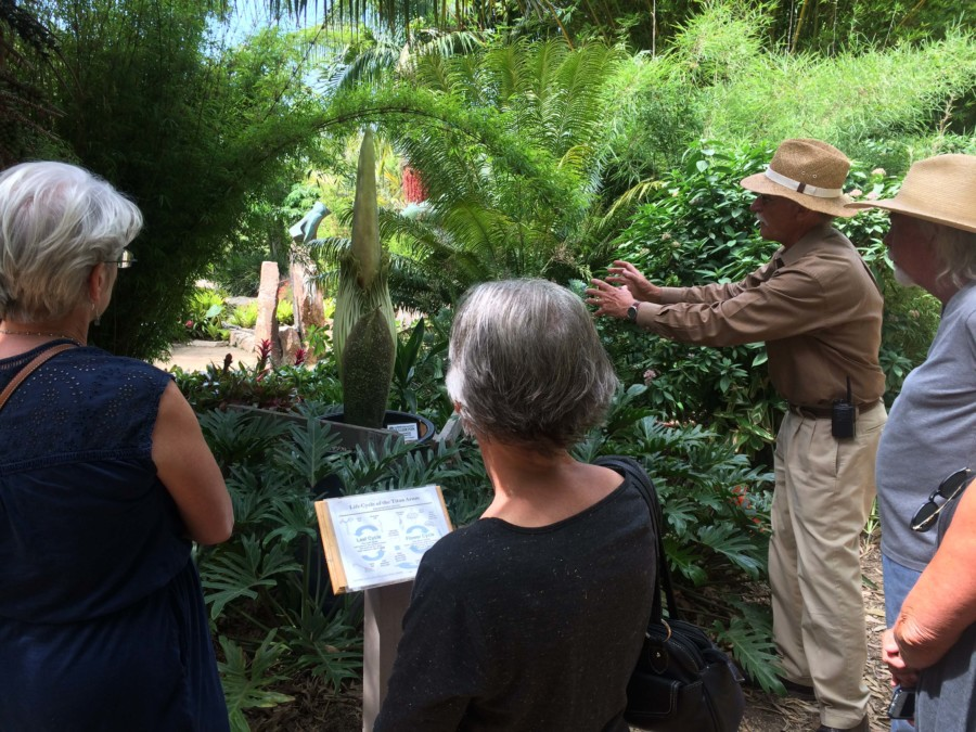 What's that Smell?  'Corpse Flower' blooms