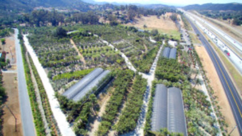 Moon Valley Nurseries: Leading growers and much more!