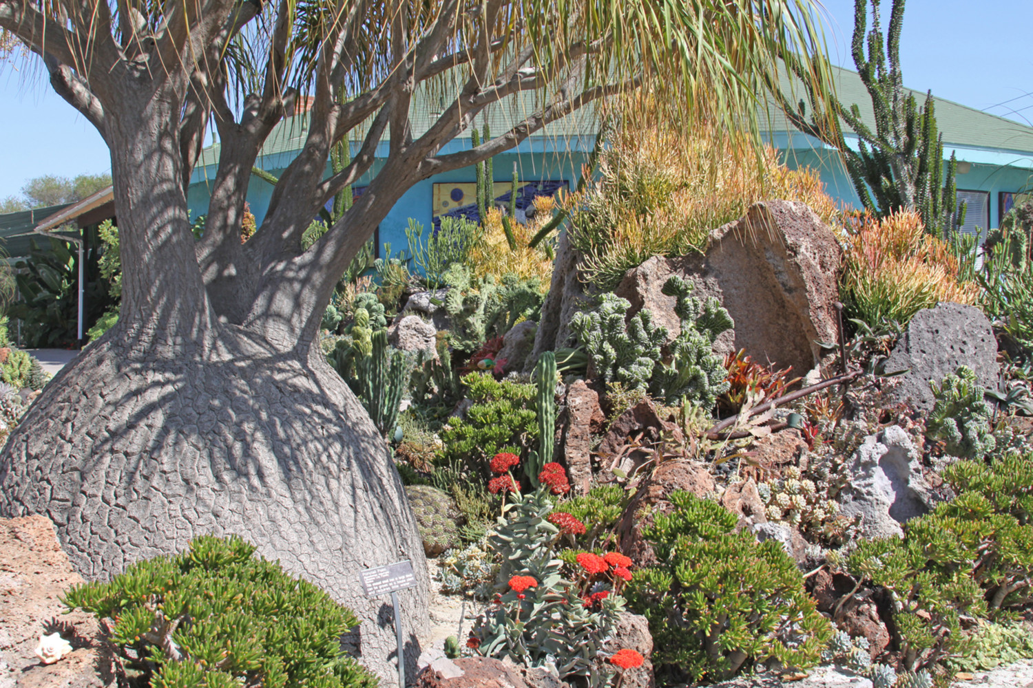San Diego Botanic Garden To Host Succulent Show, Fall Festival This Weekend