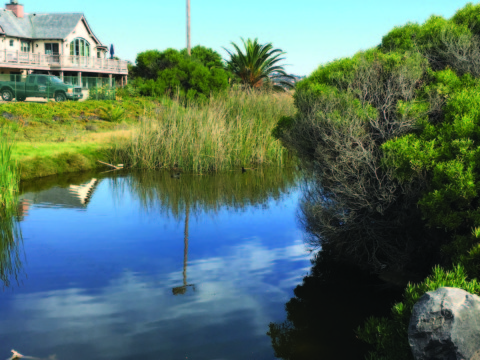 SANDAG recommends saltwater option for Buena Vista Lagoon