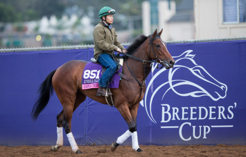 Study: Breeders' Cup World Championships huge boost for local economy