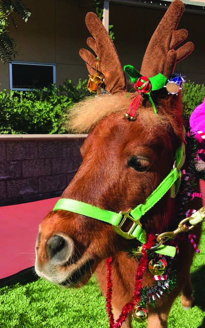 Encinitas girl brings back 'Christmas Pony' for Ronald McDonald House
