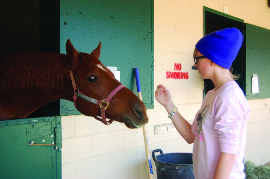 Fairgrounds takes in 850 animals displaced by Lilac Fire