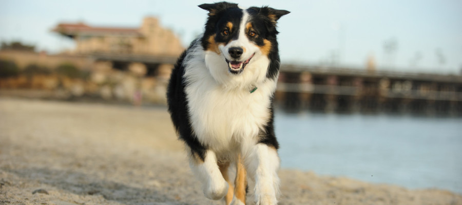 More dog days, off-leash hours coming to Del Mar beaches