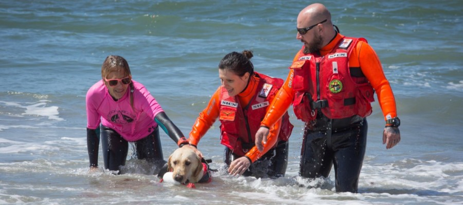 Rescue dogs hit the Del Mar beach