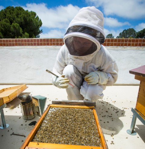 Pesticide spray kills honeybees in Del Mar