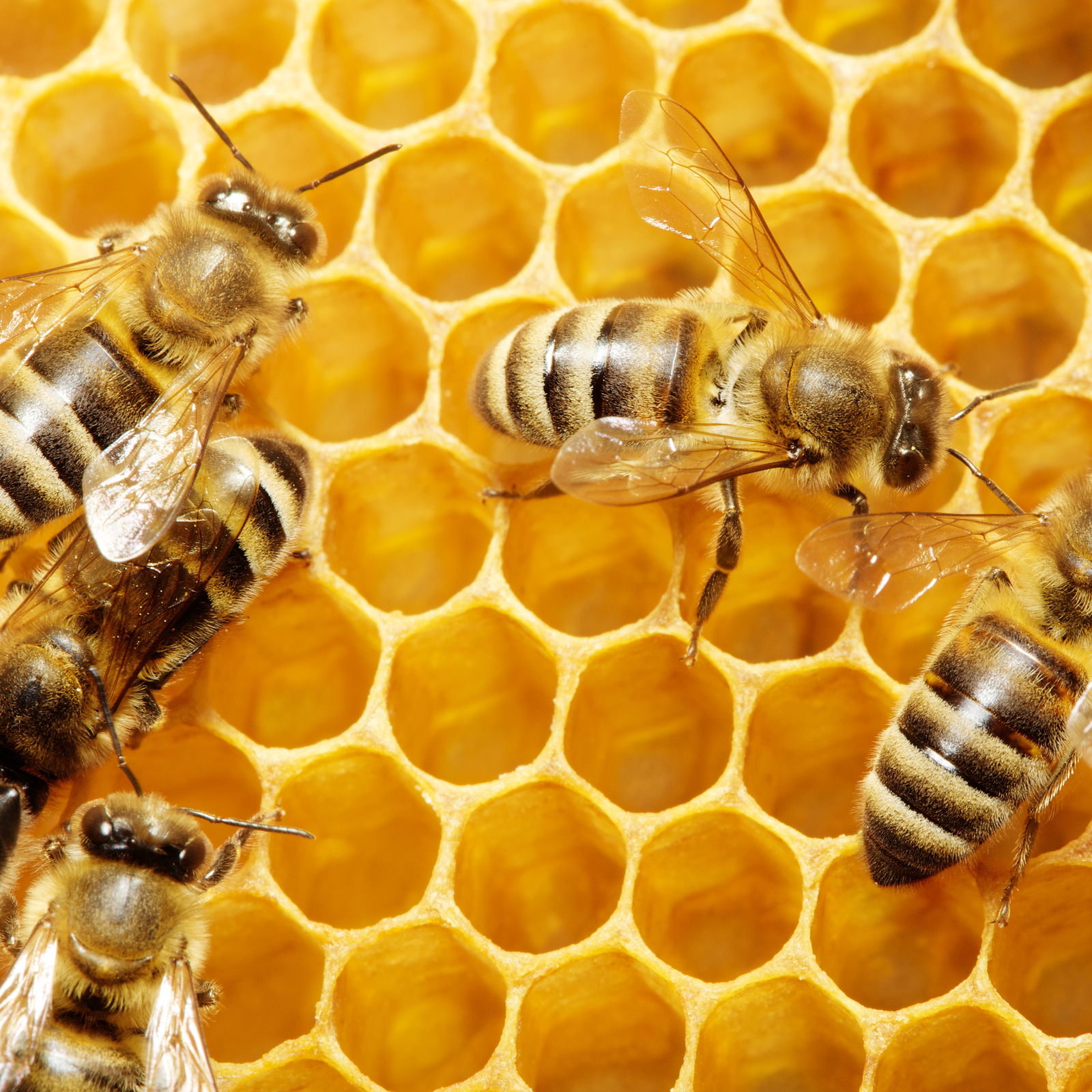 Pesticide in Del Mar is killing honeybees