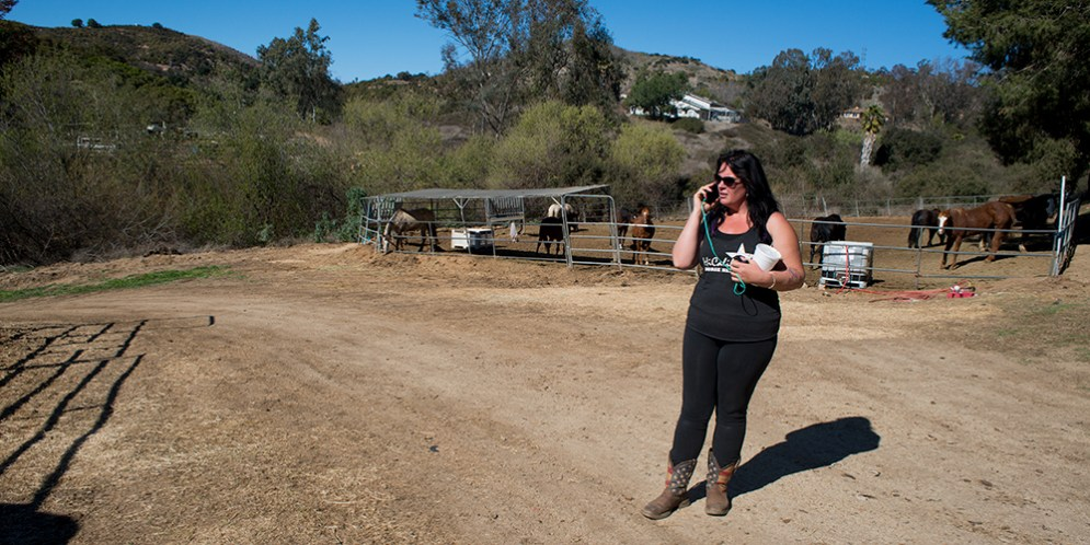 HiCaliber Horse Rescue set to close as investigations of nonprofit continue