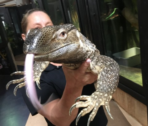 EcoVivarium offers hands-on educational encounters with reptiles, amphibians
